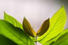 Green leaves on blurred background. Few green leaves on blurred background in triangle form Royalty Free Stock Photos