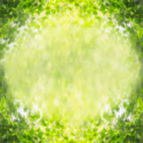 Green leaves blurred nature background, border Royalty Free Stock Photography
