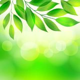 Green leaves on bokeh background. Green leaves on the bokeh background, vector illustration Stock Illustration