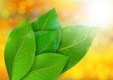Green leaves on bokeh background Stock Photo