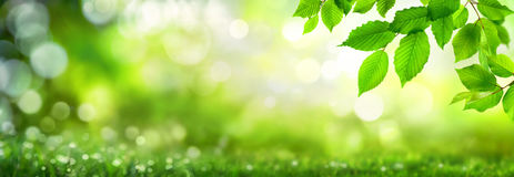 Green leaves on bokeh nature background stock photography