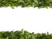 Green leaves border. Colorful green leaves making a top and bottom border frame with copy space in the center Royalty Free Stock Photos