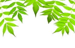 Green leaves border Stock Photos