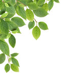 Green Leaves Border Royalty Free Stock Photo
