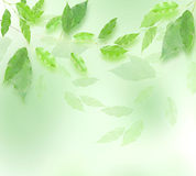 Green leaves border. Over blured background Stock Photography