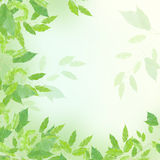 Green leaves border. Over blured background Stock Photos