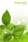 Green leaves border. Over white Stock Photo