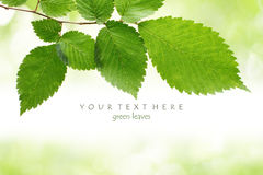Green leaves border. With bokeh background Stock Images