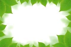 Green leaves border. Fresh green leaves border over white Stock Photos