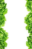 Green Leaves Border. Salad Lattuce Green Leaves Border on White Background Royalty Free Stock Images