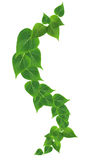 Green Leaves Border. Ecology concept. Green leaves border on white background Royalty Free Stock Photos