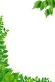 Green Leaves Border Stock Image