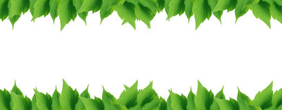 Green Leaves Border. Beautiful green leaves border on white background Royalty Free Stock Photos