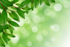 Green leaves border. On the blurred background Royalty Free Stock Image