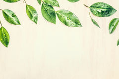 Green leaves border, close up, toned. Green leaves border, top view Royalty Free Stock Images