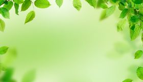Green leaves border with copy space. Spring background Royalty Free Stock Images