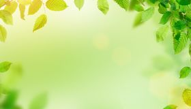 Green leaves border with copy space. Spring background Royalty Free Stock Photo