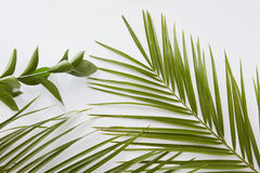 Green leaves border with copy space. For text, on white background.Flat lay Royalty Free Stock Photography