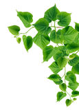 Green Leaves Border. Ecology concept. Green leaves border on white background Stock Image
