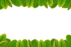 Green leaves border frame. On white blank Stock Images