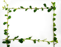 Green leaves border frame Royalty Free Stock Photography