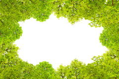 Green leaves border and frame on white isolate background. With copy space Stock Images