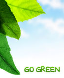 Green leaves border. Fresh plant on blue sky background, abstract natural pattern, copy space place for text, go green, spring time season concept Royalty Free Stock Images