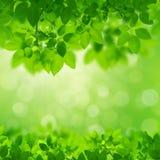 Green Leaves Border on green bokeh. Background Stock Image