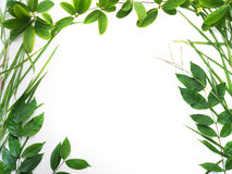 Green leaves border isolated on white background. Set of tropical green leaves border isolated on white background Royalty Free Stock Images
