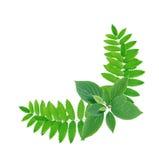 Green Leaves Border Stock Images