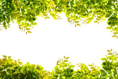 Green leaves border nature on white isolate Stock Photography