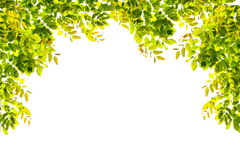 Green leaves border nature on white isolate Royalty Free Stock Images