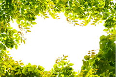 Green leaves border nature on white isolate Royalty Free Stock Image