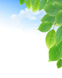 Green Leaves Border. Summer background. Green leaves border against blue sky with free space for text Stock Photo