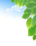 Green Leaves Border Stock Photo