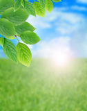 Green Leaves Border. Summer background. Green leaves border against summer field and sky Stock Photography