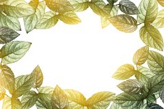 Green leaves border and sunlight transparent on white background. With copy space Stock Photography