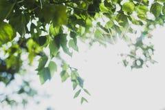 Green leaves border. Sunshine background Stock Photo