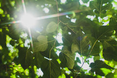 Green leaves border. Sunshine background Stock Image