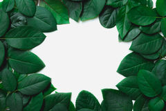 Green leaves border. Tree leaf frame isolated on white. Background with clipping path Stock Image