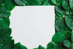 Green leaves border. Tree leaf frame isolated on white. Background with clipping path Stock Images