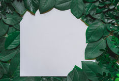 Green leaves border. Tree leaf frame isolated on white. Background with clipping path Royalty Free Stock Photography