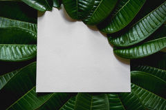 Green leaves border. Tree leaf frame  on white. Background with clipping path Royalty Free Stock Image