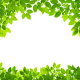 Green leaves border on white Stock Photo