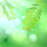 Green leaves bouquet on blury green Stock Photo