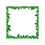 Green leaves box vector illustration
