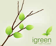 Green leaves on branch Royalty Free Stock Photo