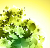 Green leaves branch background. Vector leaves background - green color, sunny day vector Stock Images