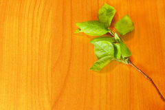 Green leaves. Branch with green leaves on orange wooden board Royalty Free Stock Photos