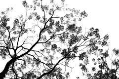 Green leaves and branches monochrome. On white background Royalty Free Stock Images